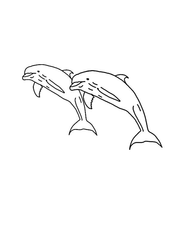 Dolphin, : dolphin-amazing-jump-in-the-air-page-to-color.jpg