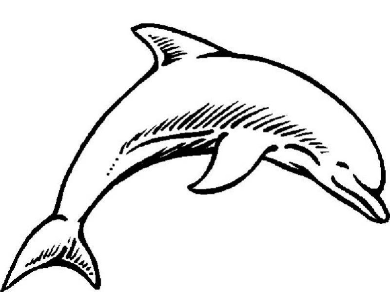 dolphin beauty curve page to color: dolphin-beauty-curve-page-to ...
