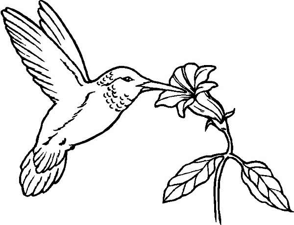 Hummingbirds, : flowers-provide-nectar-for-hummingbird-to-eat-on-hummingbird-coloring-page.jpg