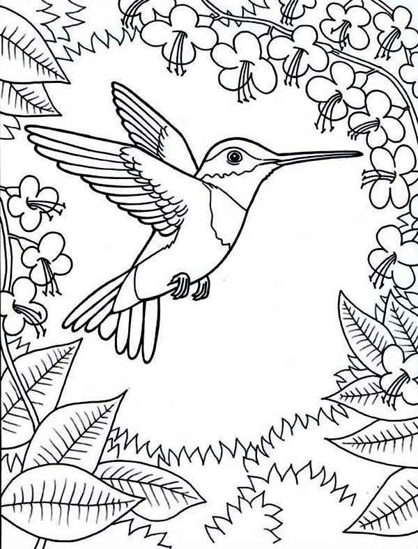 Hummingbirds, : framed-by-flowers-hummingbird-coloring-page.jpg
