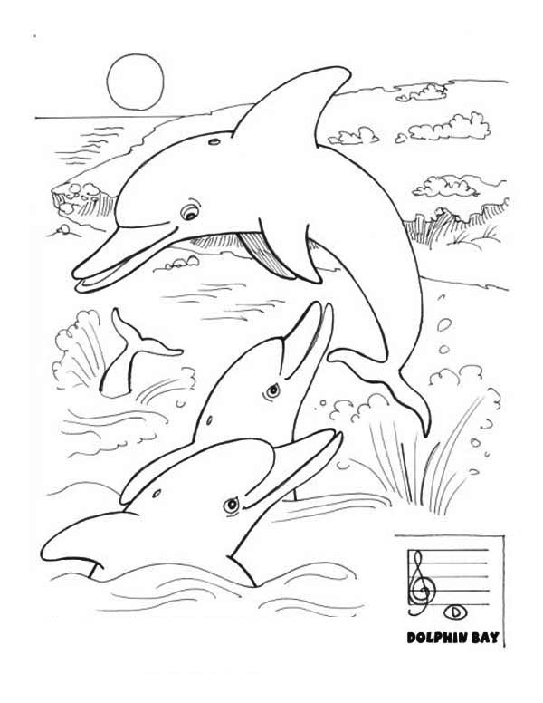 Dolphin, : how-many-dolphin-did-you-see.jpg