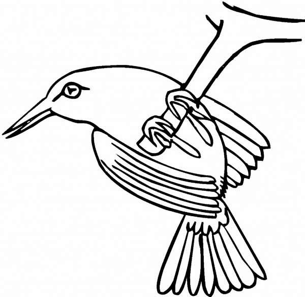 Hummingbirds, : humming-bird-line-art-to-color.jpg