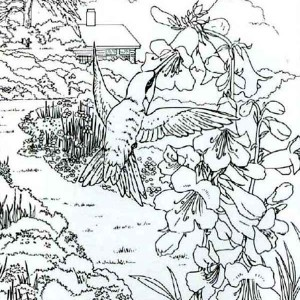 realistic hummingbird coloring pages gianfreda 759911