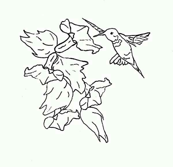 Hummingbirds, : hummingbird-steady-flying-to-eat-nectar-coloring-page.jpg