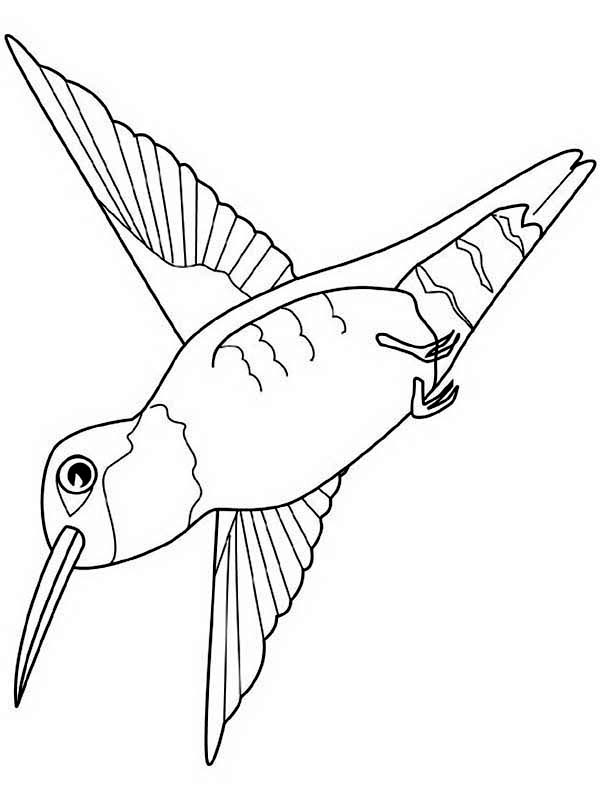 Hummingbirds, : hummingbird-view-from-the-ground-coloring-page.jpg