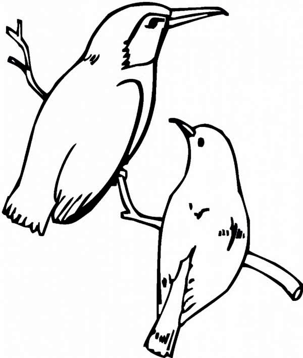 Hummingbirds, : male-and-female-hummingbird-coloring-page.jpg