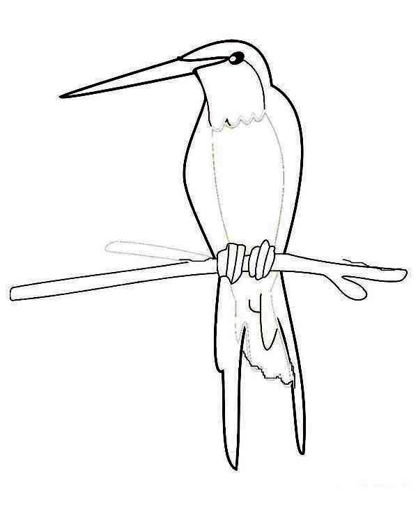 Hummingbirds, : pencil-sketch-of-a-hummingbird-coloring-page.jpg