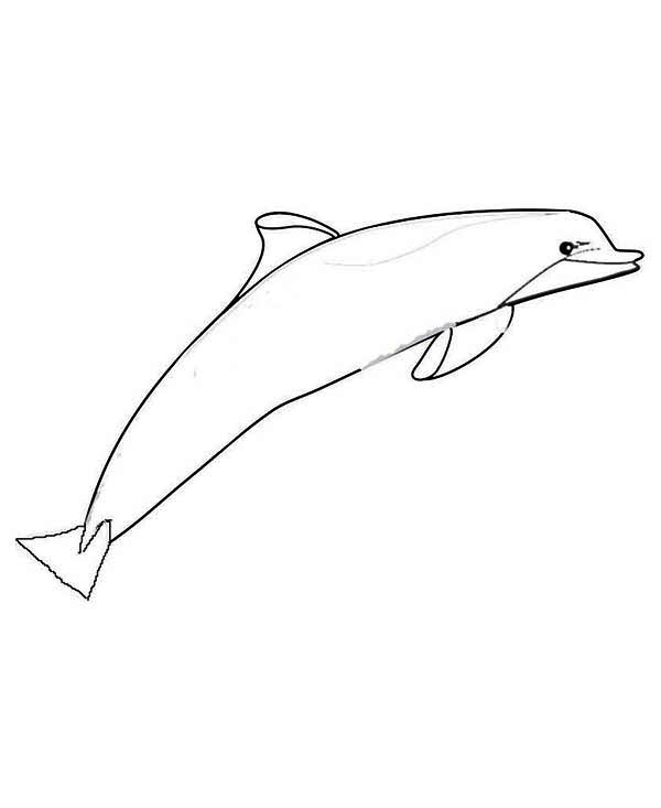 Dolphin, : sleek-dolphin-coloring-page.jpg