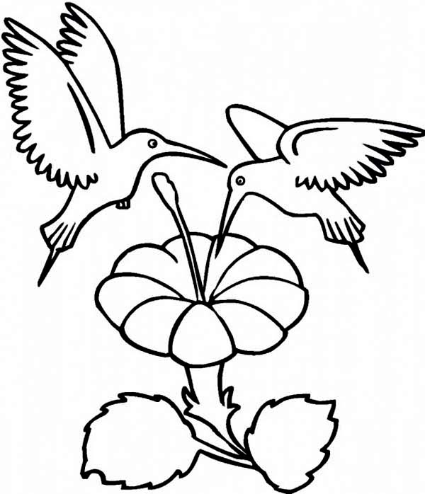 Hummingbirds, : two-hummingbirds-eats-coloring-page.jpg