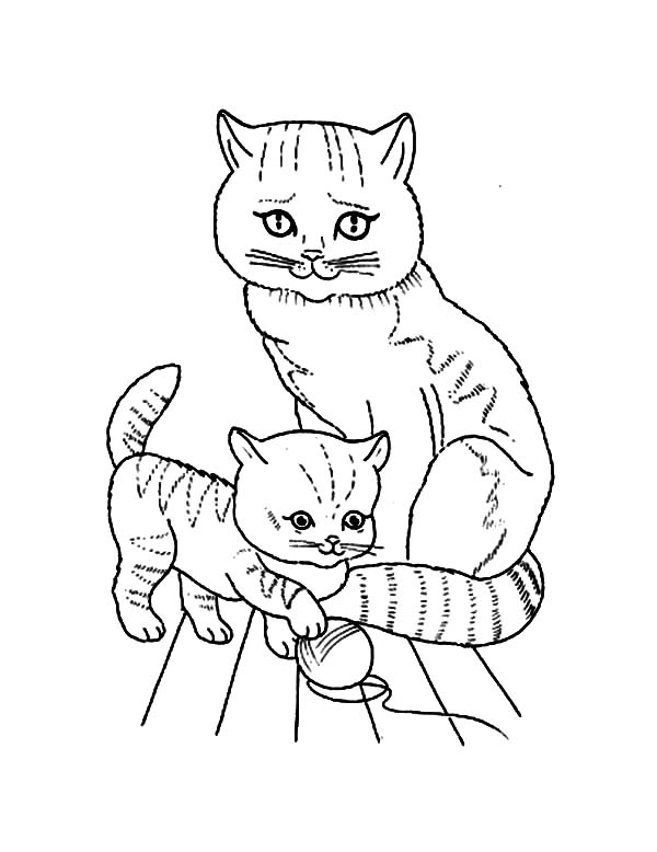 Kitty Cat, : A Kitty Cat Mother Watching Its Kid Coloring Page