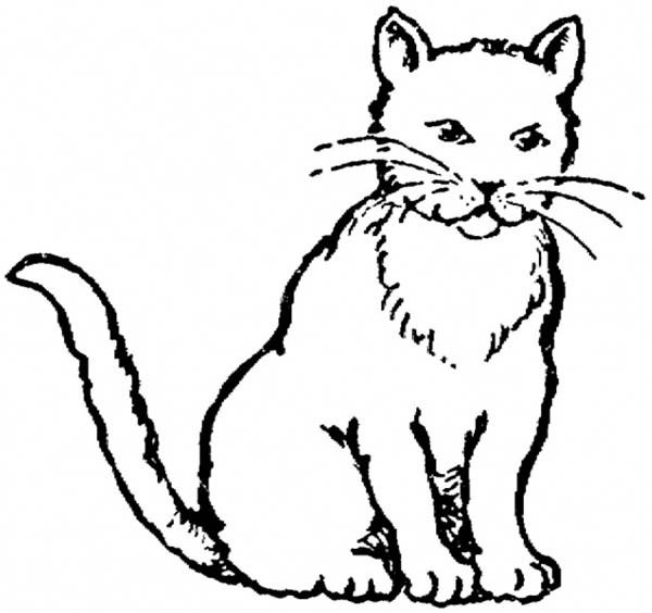 Kitty Cat, : A Realistic Drawing of Kitty Cat Coloring Page