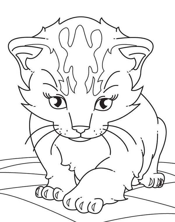 Kitty Cat, : A Sleppy Little Kitty Cat on the Floor Coloring Page