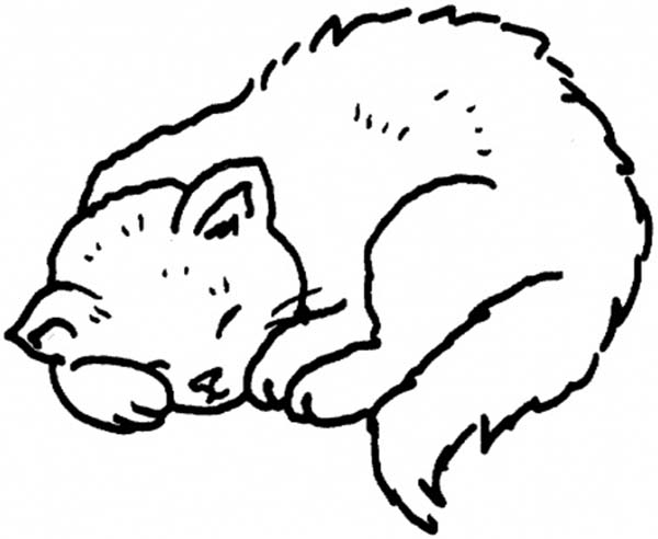Kitty Cat, : A Sweet Kitty Cat on Its Napping Session Coloring Page