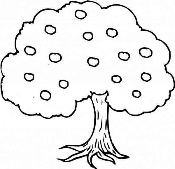 Apple Tree Coloring Pages 8