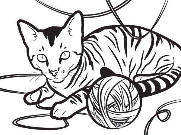 Tabby Cat Coloring Page Gray Colouring PagesColor