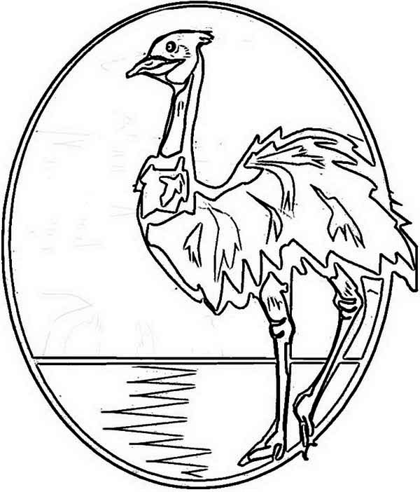 Australia Day, : An Illustration of Australia Emu for Australia Day Coloring Page