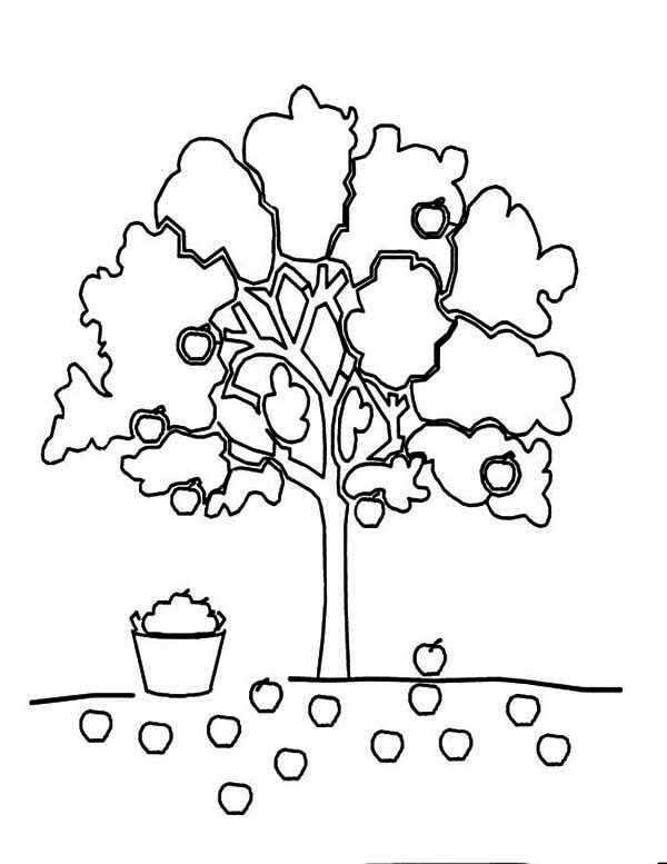 Apple Tree, : Apple Falling Down From AppleTree Coloring Page