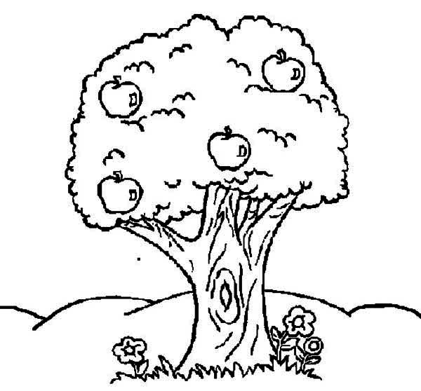 Apple Tree, : Apple Tree and Flower Coloring Page