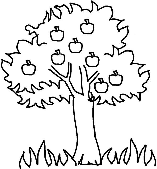 Apple Tree, : Apple Tree and Grass Coloring Page