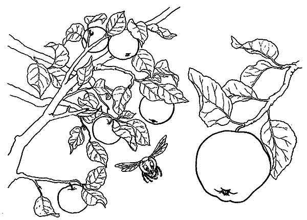 Apple Tree, : Apple Tree and a Bee Coloring Page