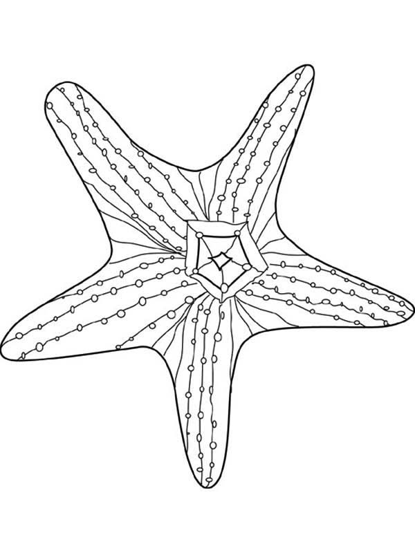 Starfish, : Awesome Starfish Coloring Page