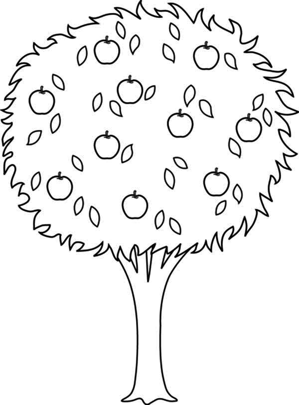 Apple Tree, : Huge Apple Tree Coloring Page
