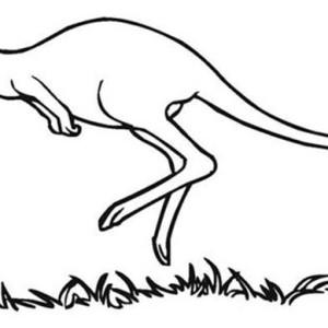 kangaroo famous australia animal on australia day coloring page