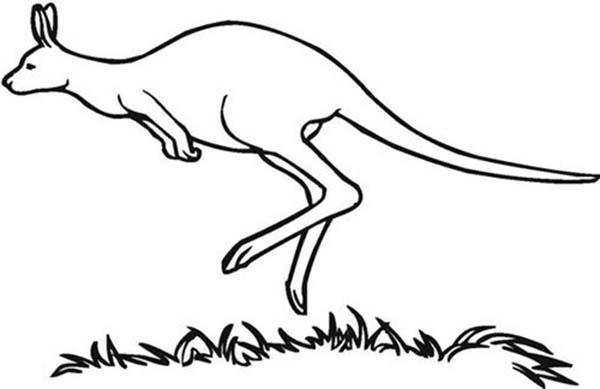 Australia Day, : Kangaroo, Famous Australia Animal on Australia Day Coloring Page