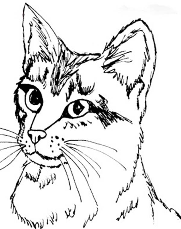 printable kitten coloring pages 002