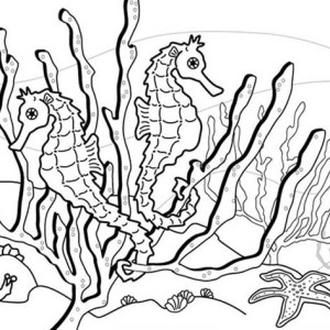 seahorse habibat is around seaweed coloring page - Cute Baby Seahorse Coloring Pages