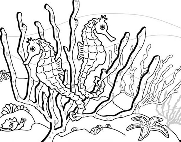 Seahorse, : Seahorse Habibat is around Seaweed Coloring Page