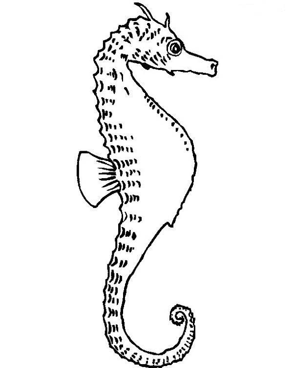 Seahorse, : Seahorse with Its Dorsal Fin at the Back Coloring Page