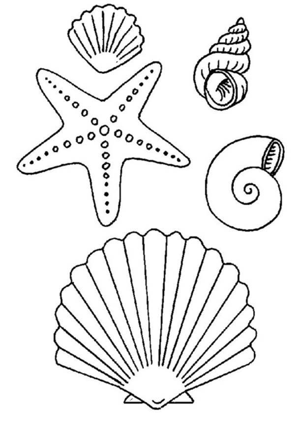 Starfish, : Starfish and Sea Shell Coloring Page