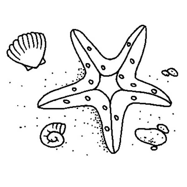 Starfish, : Starfish and Two Shell Coloring Page