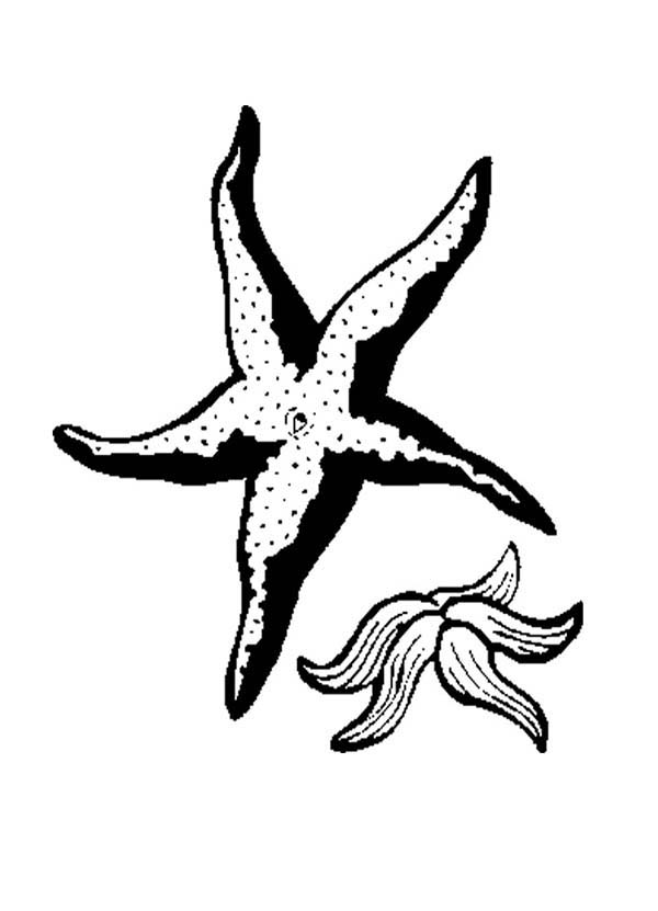 Starfish, : Two Starfish Coloring Page