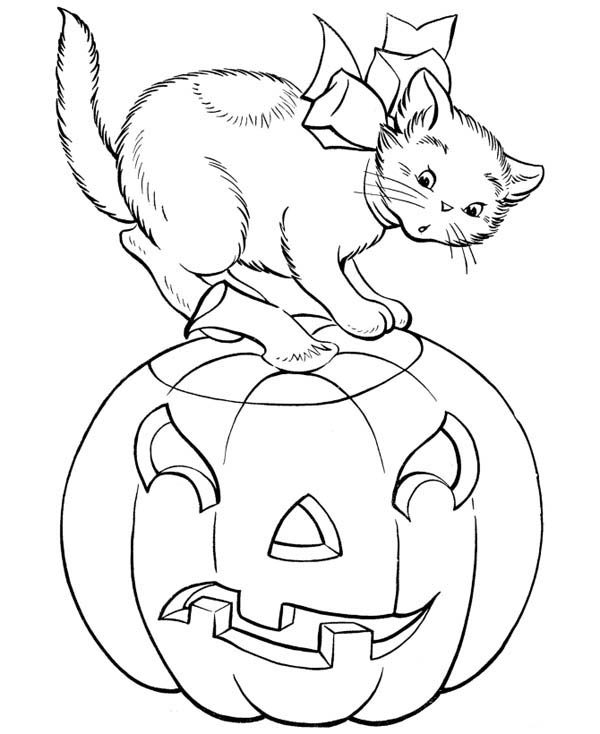 Pumpkins, : A Cat and Halloween Pumpkins Coloring Page