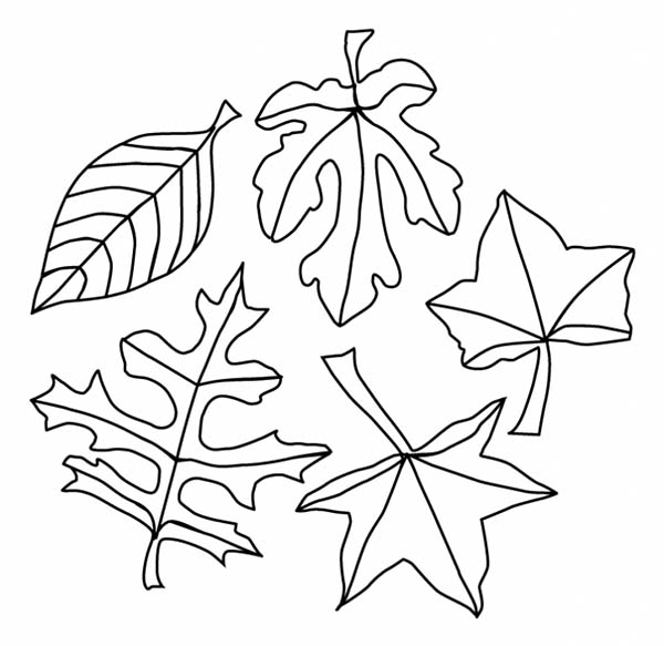 Fall Leaf, : A Lot of Maple Fall Leaf Coloring Page