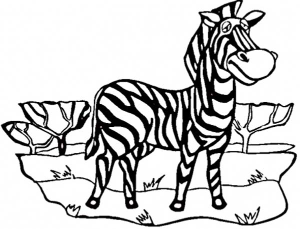Zebra, : Amazing African Zebra Coloring Page