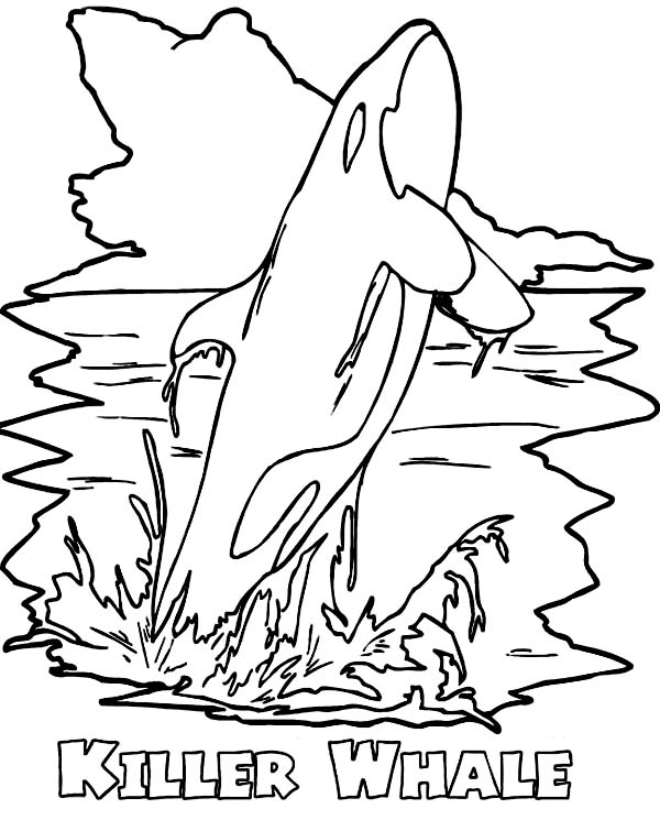 Whale, : Amazing Killer Whale Coloring Page