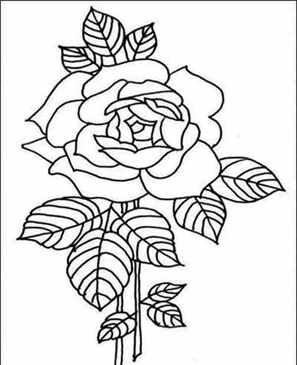 Flowers, : Amazing Red Rose Flower Coloring Page