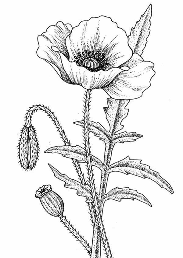 Flowers, : Awesome Flower Drawing Coloring Page