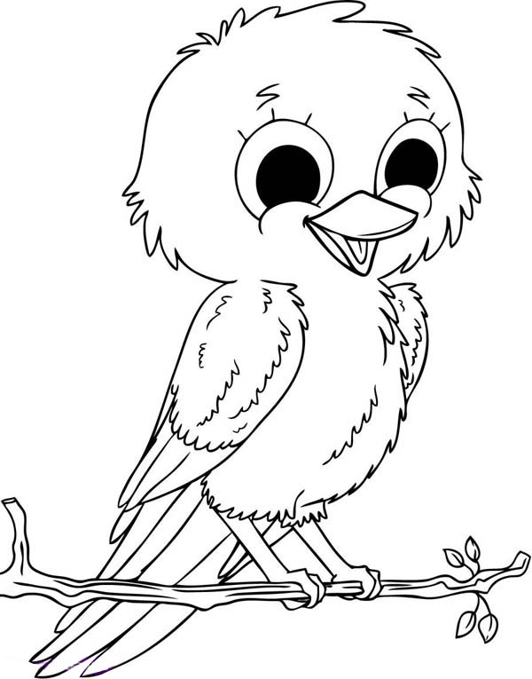 Robin, : Baby Robin Bird Coloring Page