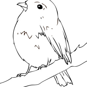 Baby Robin Coloring Pages Coloring Coloring Pages