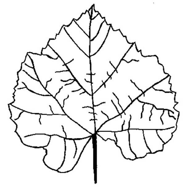 Fall Leaf, : Birch Fall Leaf Coloring Page