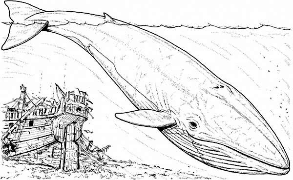 Whale, : Blue Whale and an Old Sinking Galeon Coloring Page