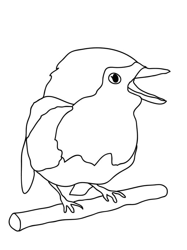 Robin, : Cute Baby Robin Bird Coloring Page