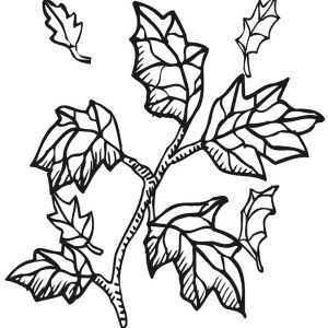 fall leaf from tree branch coloring page