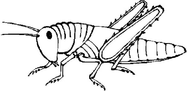 Grasshopper, : Grasshopper Clipart Coloring Page