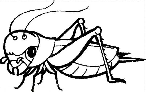 Grasshopper, : Grasshopper is an Insect Coloring Page