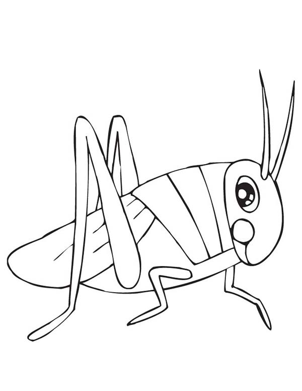 Grasshopper, : Grasshopper with Big Eye Coloring Page